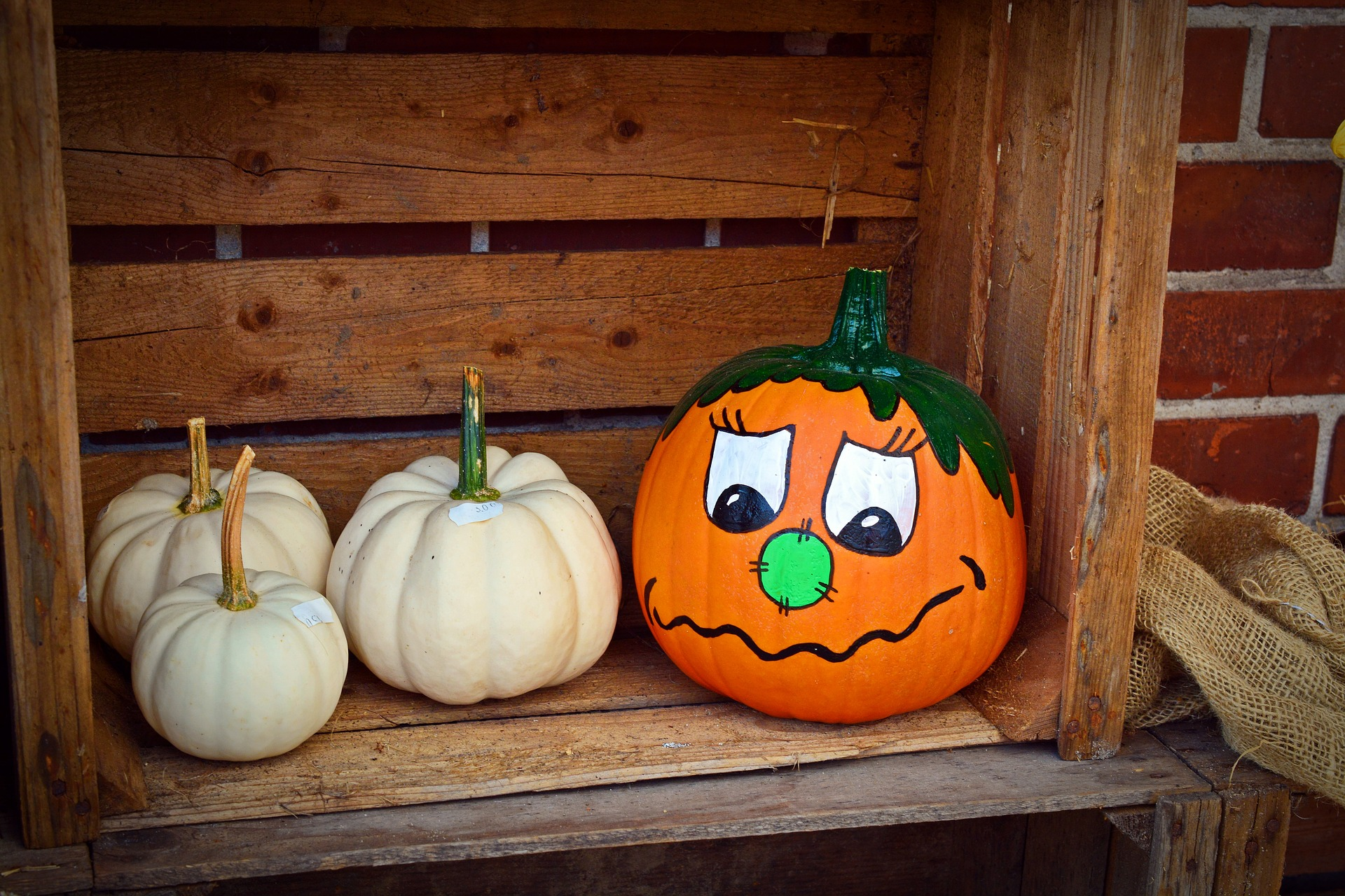 Kids Can Pick A Pumpkin To Paint At The Art Establishment