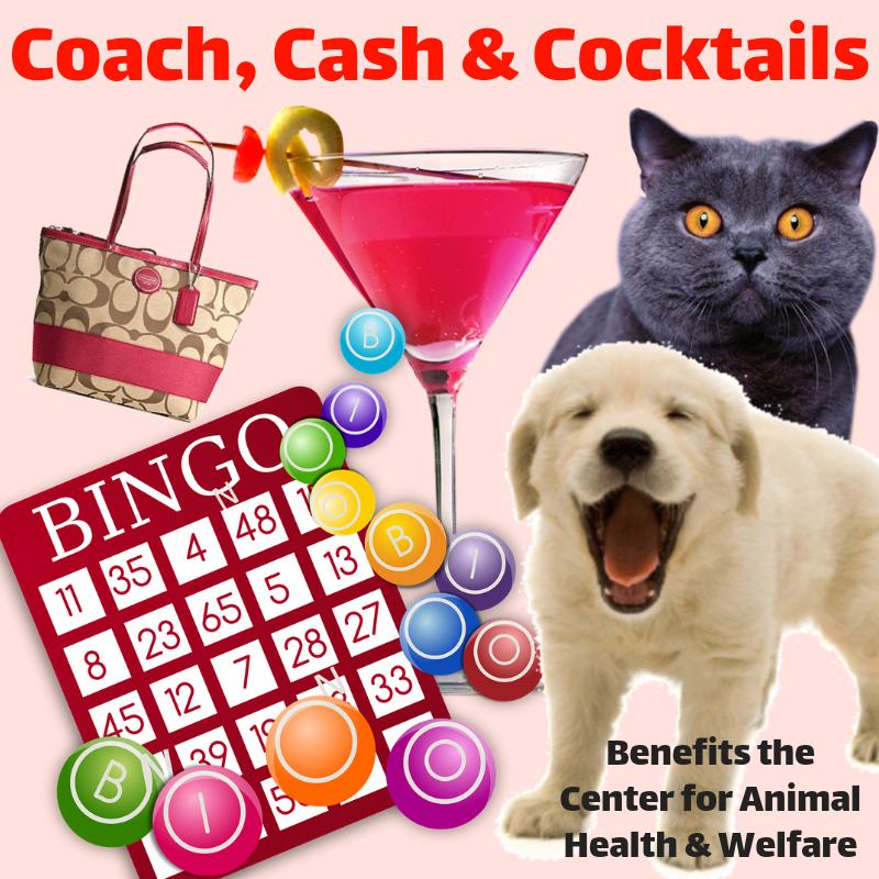 Coach, Cash & Cocktails Bingo