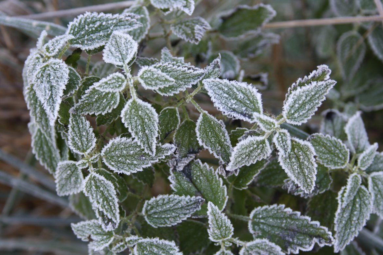 winter frost freeze warning