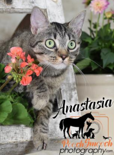 Anastasia Cat