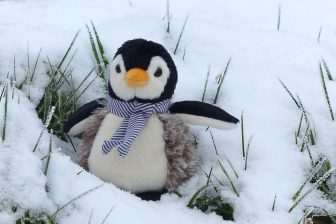 penguin snow