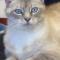 Azure cat