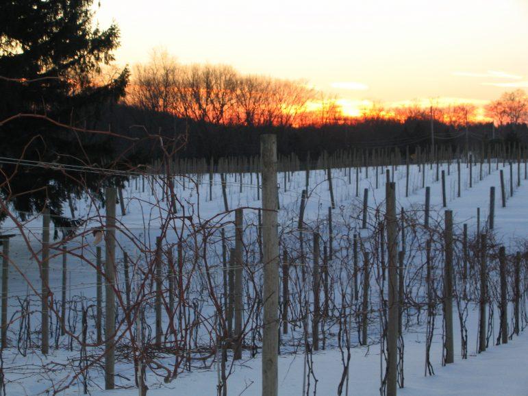 Crossing Vineyards wine