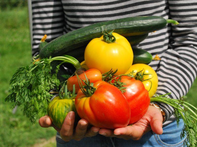 vegetables school