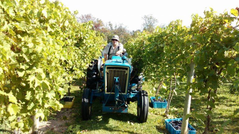 Rushland harvest wines