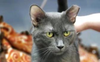 Madison cat