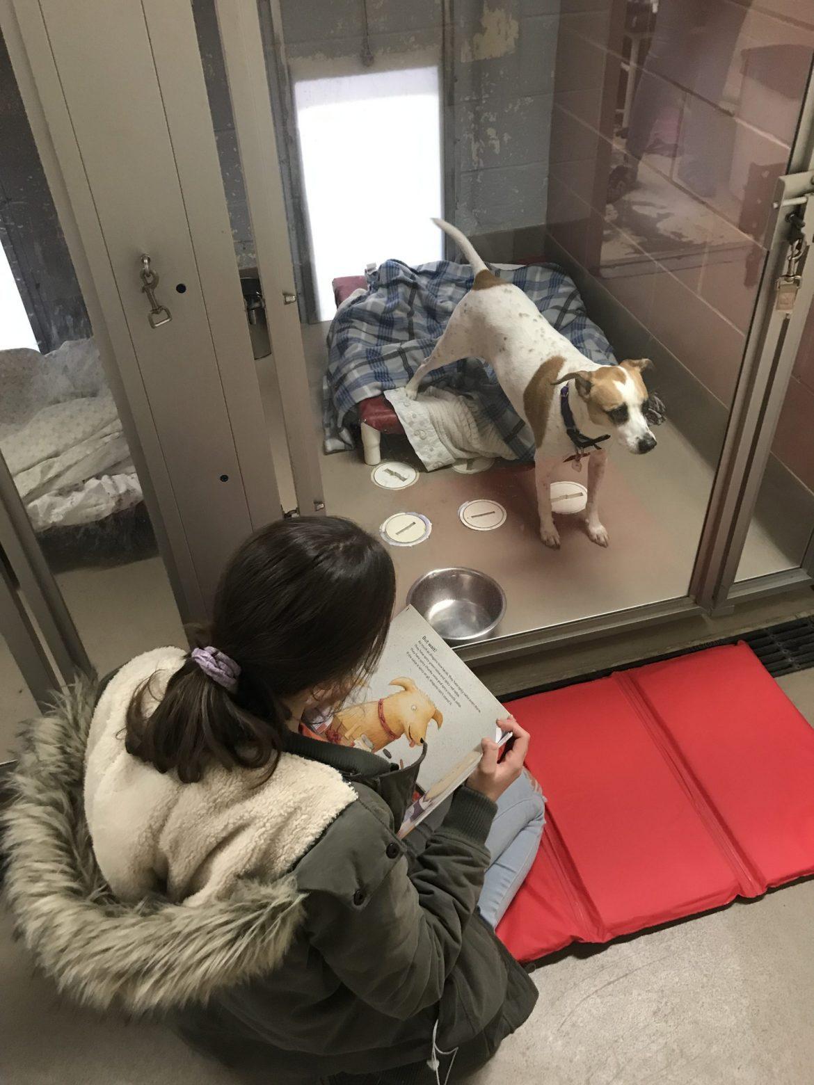 Reading Program Animal