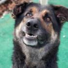 Ollie Shelter Rescue Dog
