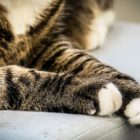 cat legs animal cruelty