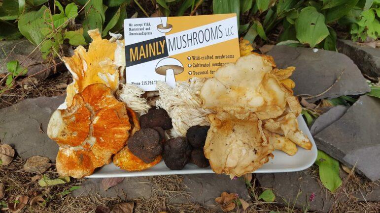 Mainly Mushrooms