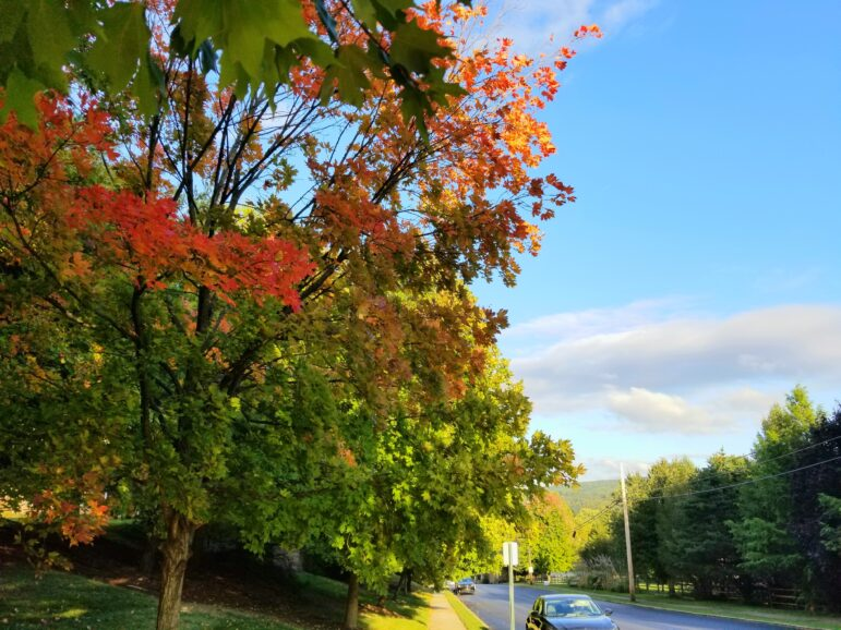Fall Leaves Turning Early Thanks To Chilly Temperatures Photos