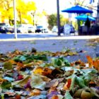 Leaves Leaf Collection Hellertown