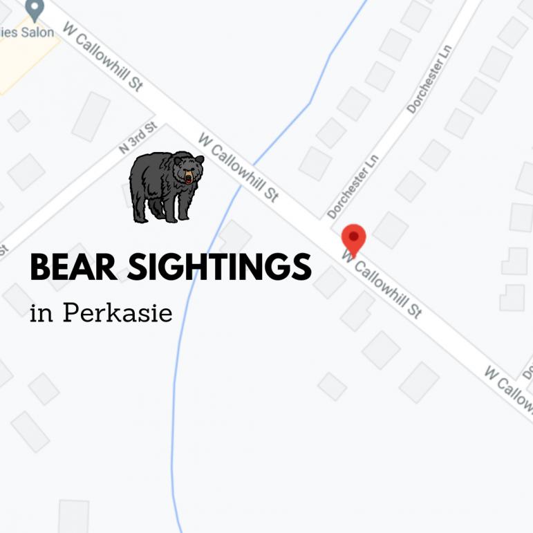 Bear sightings Perkasie