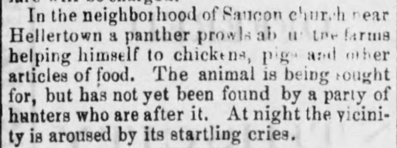 Saucon Panther